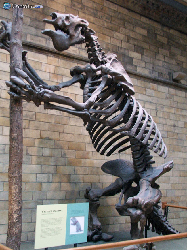 Visiting The Natural History Museum In London