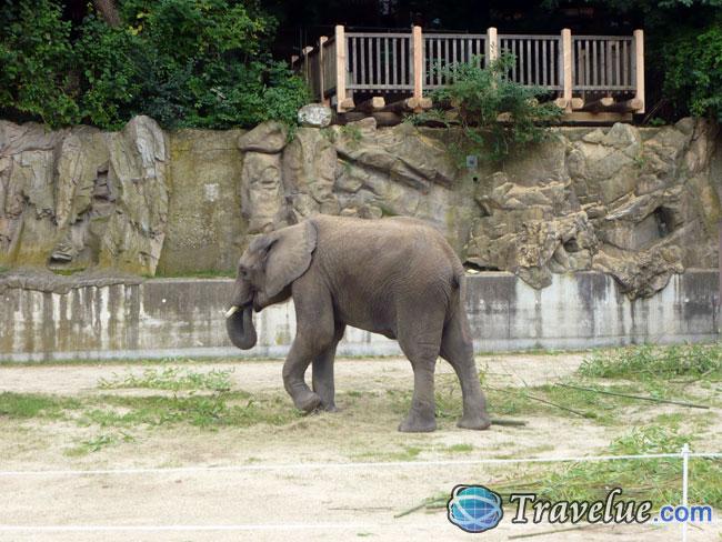 Schonbrunn Zoo in Vianna, Austria